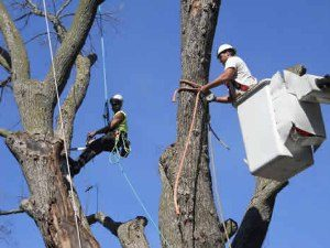 Tree removal services in waukesha & milwaukee - A New Leaf Tree Services
