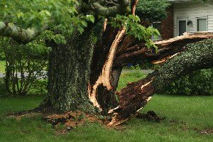 Tree removal services in Sussex, Waukesha county
