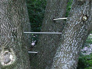 Tree Cabling & Static support systems