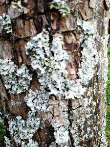 Tree Diseases