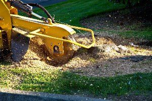Tree Services - Tree stump grinding & stump removal Waukesha & Milwaukee, Wisconsin