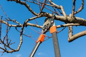 Tree trimming / tree pruning Waukesha, Wisconsin