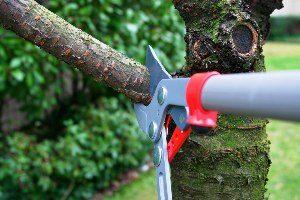 Tree trimming / tree pruning Milwaukee, Wisconsin