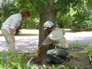 Hazardous tree evaluations & tree risk assessments