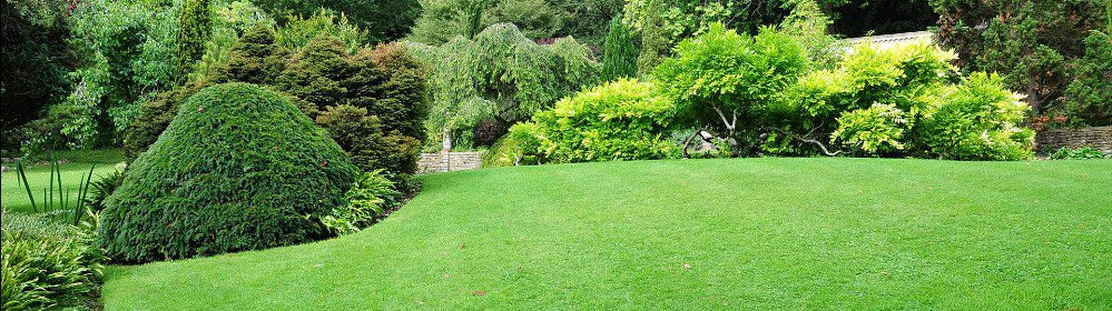 Tree, Shrub & Hedge Maintenance
